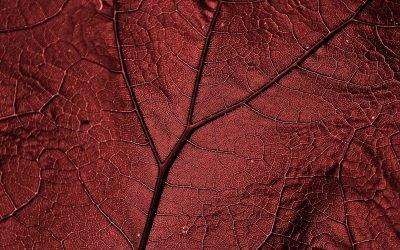 TAVI bei Aortenklappenstenose
